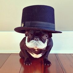"""Four Score, and Seven Years ago...."", French Bulldog, Franse Bulldog, President…"