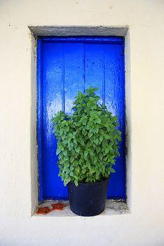 Karpathos+Island, Greece Basil Plant on the window Albania, Macedonia, Greek Blue, Basil Plant, Greek Design, Windows, Greek Islands, Beautiful Islands, Athens