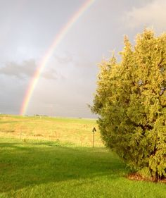 Tempted to search for the pot of gold in the NW pasture!