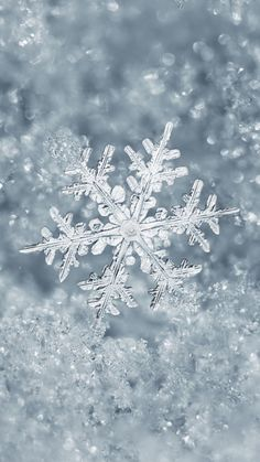 Snowflake Winter Wallpaper for iPhone/Android