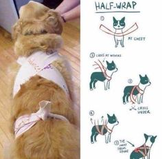 Using a scarf or band, this dog anxiety wrap will help your pooch feel secure when there are loud noises like thunder or fireworks outside. #doganxietydiy