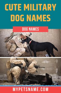 Sheba, meaning 'oath' in Hebrew, is a pawsitvely adorable choice for your shepherd sounding both strong and beautiful. Find more such cute military dog names that are equal parts cute and fierce!   #militarydognames #cutemilitarydognames #armydognames Cute Pet Names, Dog Names, Brave Animals, Military Dogs, Savannah Chat, Ranger, Your Dog, The Incredibles, Strong