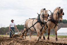 Stephen Leslie plowing a field at his farm in Vermont with Cassima, left, and Tristan, a pair of Norwegian Fjord draft horses. Description from mobile.nytimes.com. I searched for this on bing.com/images