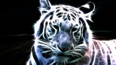 Thats the most beautiful animal in the nature, the siberian tiger. I hope you like the fractal! Please comment guys White Bengal Tiger Tiger Wallpaper, Animal Wallpaper, Wallpaper Pictures, Nature Wallpaper, Art Tigre, Iphone Bleu, Iphone 4s, White Bengal Tiger, White Tigers