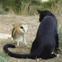 'Funny GiF Animation :D Cat fighting with an owl :D