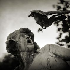 raven! Run! or hold very still....