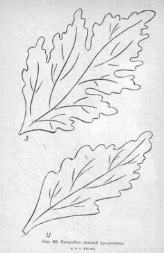 Хризантема продолжение 3