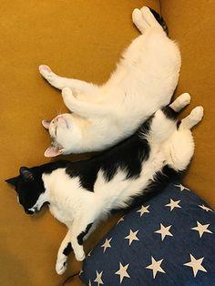 寒暖差(web掲載のお知らせ) | うちの猫がまた変なことしてる。【猫まんが】