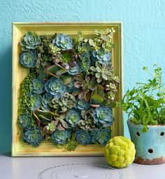 How to make a succulent vertical garden: Create a living picture out of hardy succulents.