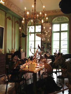 Deyrolle taxidermy shop, Paris
