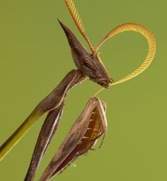 Piotr Naskrecki is back talking all about Gorongosa's praying mantids. These may look like aliens from another planet, but they're home is closer than you think…       http://www.gorongosa.org/blog/bush-diaries/empusids