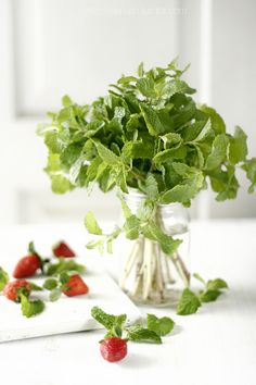 Mint leaves. Mint is great for digestion issues and disorders! Refreshing natural addition to water on a hot summer day! #usanahealthyliving