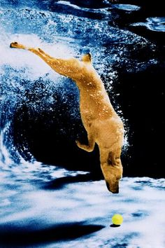 another diving dog