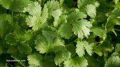 Benefits parsley