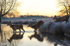 Фотография The morning bath автор Max Ellis на 500px