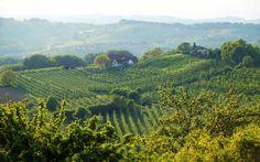 Ausflugsziele in der Region Steiermark Heart Of Europe, European Summer, Homeland, Vineyard Vines, Austria, Places To Visit, Explore, Summer Programs, Kraut