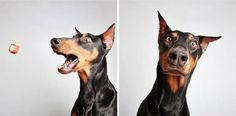 Dans l'Utah, aux USA, une organisation animalière de sauvetage et d'adoption a eu une idée incroyable afin de trouver un foyer à tous les chiens de ses refuges.  La photographe géniale à l'origine de cette séance …
