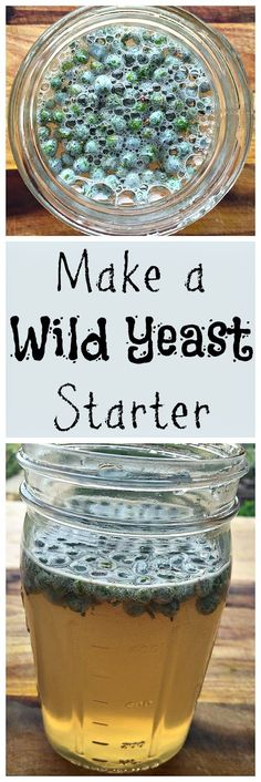 Cultivate your own wild yeast for homebrewing or natural soda making!