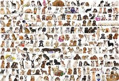 The World of Dogs, a 2000-pc Eurographics jigsaw puzzle, found in KickAss Crazy at Kickasspuzzles.com.