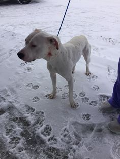 Pitbull with tan spots found on County Road 10 south of Albany around Feb 1-2. Attempt was made to find the owner, but no success. Our Sheriff's Office took the dog to the Melrose Vet Clinic, 320-256-4252.