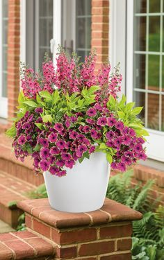 Container Gardening Full Sun Container Plants 5 - Deadhead if the plants begin to appear untidy and they'll re-bloom within an about a week. So, choose a location where it is sheltered from wind, Full Sun Container Plants, Container Flowers, Container Gardening, Succulent Containers, Sun Plants, Full Sun Planters, Potted Plants Patio, Fall Planters, Plants That Love Sun