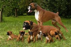 Pregnant Dog? Dr. Cathy Alinovi Answers Your FAQs About Canine Pregnancies