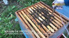 Tratarea familiilor de albine cu acid oxalic  - 3.5% prin picurare