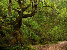 Parque de Redes, Asturias, Spain.