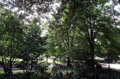 """Universidade de Vila Real cria """"jardins terapêuticos"""" para cura física e mental - PÚBLICO"""
