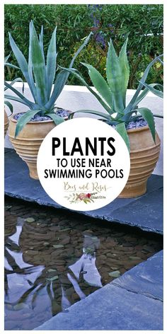 plants to use near swimming pools plants swimming pools landscape landscape ideas landscape around pools plantstousenearswimmingpools plants swimmingpools landscape landscapeideas landscapearoundpools Plants Around Pool, Pool Plants, Above Ground Pool Landscaping, Swimming Pool Landscaping, Backyard Plants, Small Backyard Landscaping, Backyard Patio, Landscaping Ideas, Mulch Landscaping