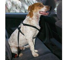 Hundesicherheitsset M Gurt- & Brustgeschirr Dogs, Animals, Dog Accessories, Pet Dogs, Animales, Animaux, Doggies, Animal, Animais