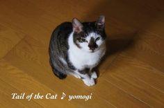 にゃんこ29♪ - http://iyaiyahajimeru.jp/cat/archives/57148