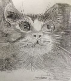 Yolo is the new daughter's pet and I decided to draw it, I enjoy to draw is a relax... Enjoy my pin