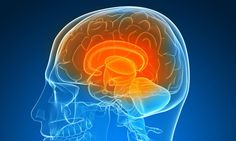 Gene that INCREASES IQ sparks new hope for dementia sufferers - U.S. study found the protein called klotho boosts brain skills - Researchers found protein could raise IQ by up to 6 points - It also raised possibility that a 'smart' drug could become available