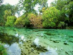 Weeki Wachee River in Spring HIll, FL. Kayaking through here is like being in Dr. Suess land... with manatees!