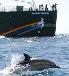 Rainbow Warrior in New ZealandDolphins swim alongside the Rainbow Warrior in the Cook Strait, New Zealand; very close to where Texan oil company Anadarko intends to begin prospecting later this © Nigel Marple / Greenpeace Rainbow Warrior, Native American Wisdom, New Zealand South Island, Go Green, Dolphins, Whale, Sailing, Around The Worlds, Creatures