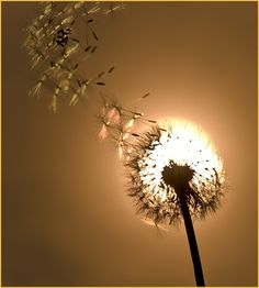 This design is one of my favorites! it looks so cool and shows a very good example of perspective design. The dandelion looks as if it is the same size as the sun and looks larger then what it really is.