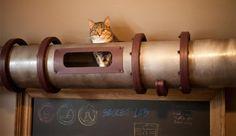 Installeer een kattenbuis door je huis. Waarom? Omdat het kan!