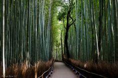 Famous Bamboo Forest of Sagano, Kyoto, Japan, Arashiyama.
