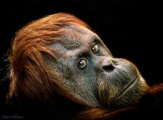 """Remember """"Animals"""" are our brothers and sister, mothers and children. Palmoil kills our relatives...http://www.un-grasp.org/"""