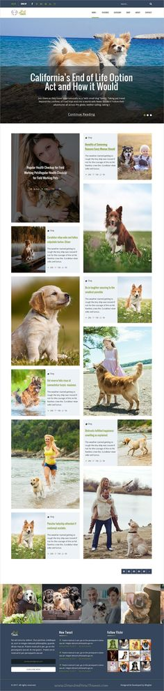 Pet town is a clean, stylish and modern trend #PSD template for #blog and #shop websites download now➩  https://themeforest.net/item/pet-town-psd-template/19068836?ref=Datasata