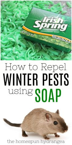 How to Repel Mice with Irish Spring This Winter - The Homespun Hydrangea. See how to repel mice with the power of soap.