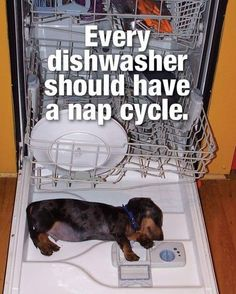 If you've ever had a Dachshund or you just love the animal, these dog memes will have you cracking up. Dachshund Quotes, Dachshund Funny, Dachshund Puppies, Weenie Dogs, Dachshund Love, Daschund, Doggies, Dapple Dachshund, Chihuahua Dogs