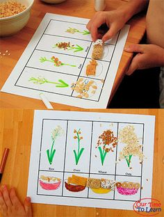 Free food groups worksheet - focus on the grain group using seeds and cereal! Cute and educational from the Our Time to Learn blog, science for preschool, kindergarten, first grade, and home school.
