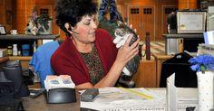 Condado dos EUA cria 'biblioteca' que empresta gatinhos antiestresse