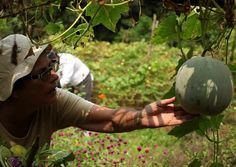 Spend an afternoon in our organic farm.