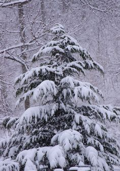 Snow covered Christmas tree in the North Carolina mountains