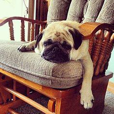 Lazy day... PUGG ^_____^ :P