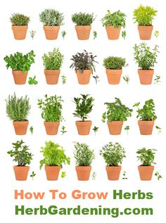 Very thorough info on growing a wide variety herbs