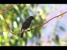 Birdwatching in Munnar